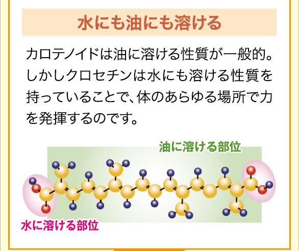 水にも油にも溶ける カロテノイドは油に溶ける性質が一般的。しかしクロセチンは水にも溶ける性質を持っていることで、体のあらゆる場所で力を発揮するのです。